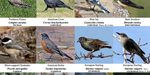 Grid of bird images and names